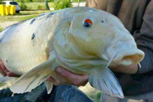 Le pescate migliori Lago delle Rose